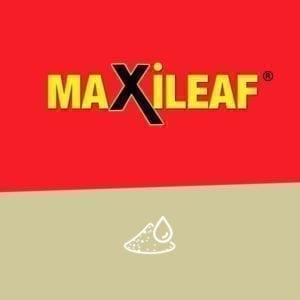 MAXILEAF grubu