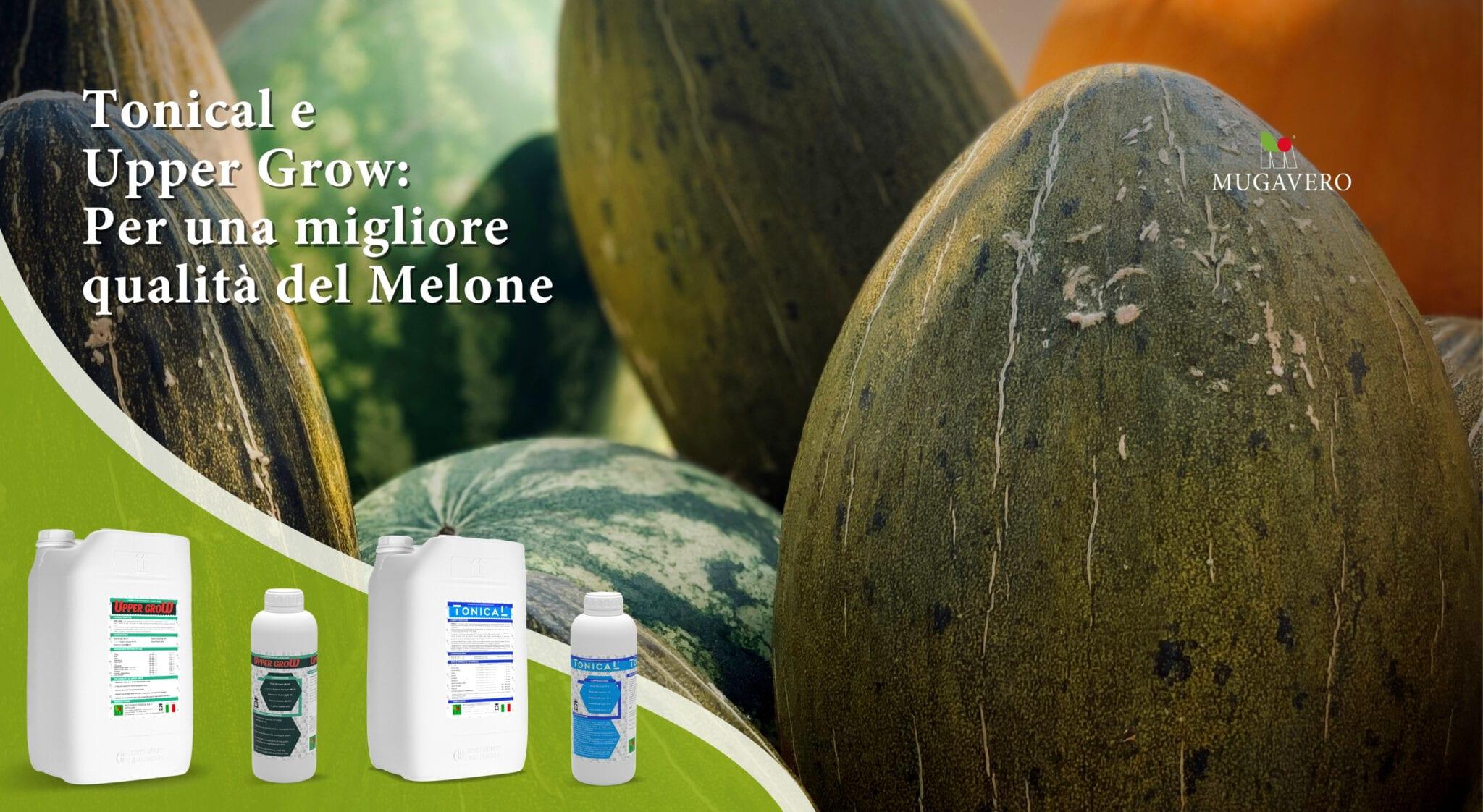Coltura Melone